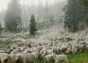 Film Still from Sweetgrass