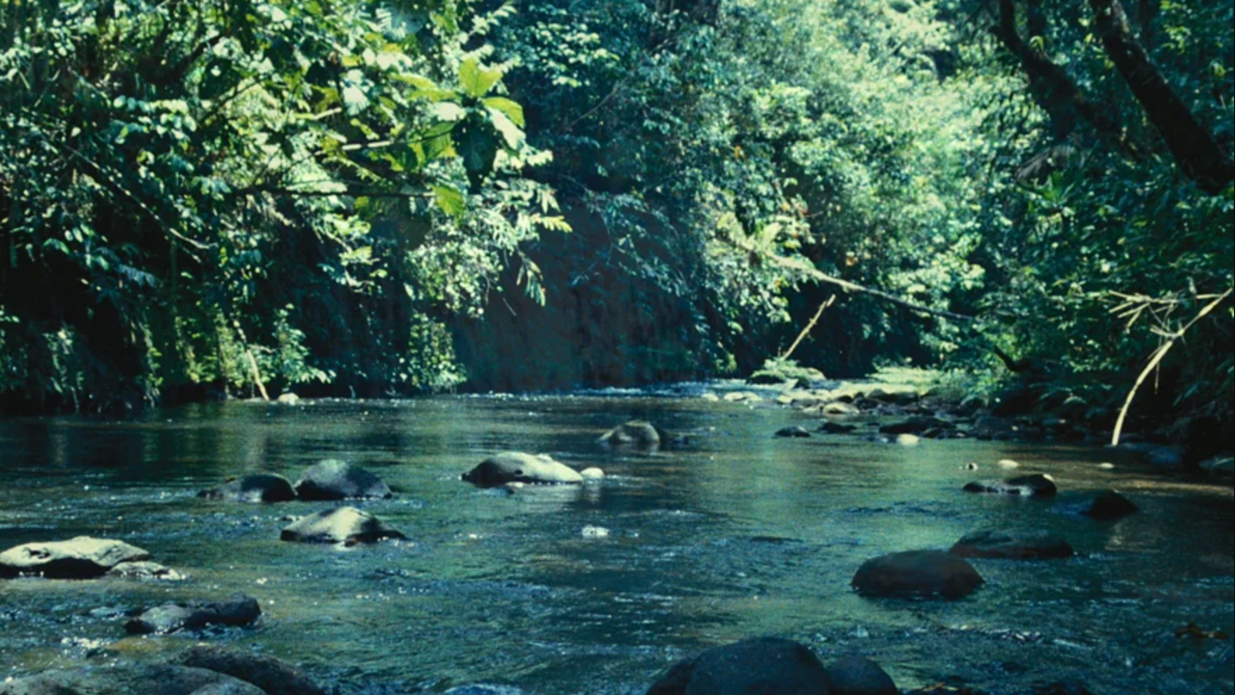 Film Still from Voices of the Rainforest