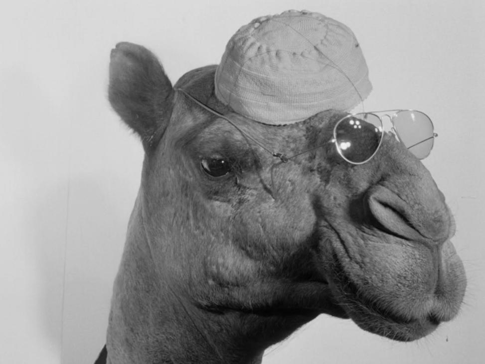 Film Stills from A Camel (1981), Ibrahim Shaddad