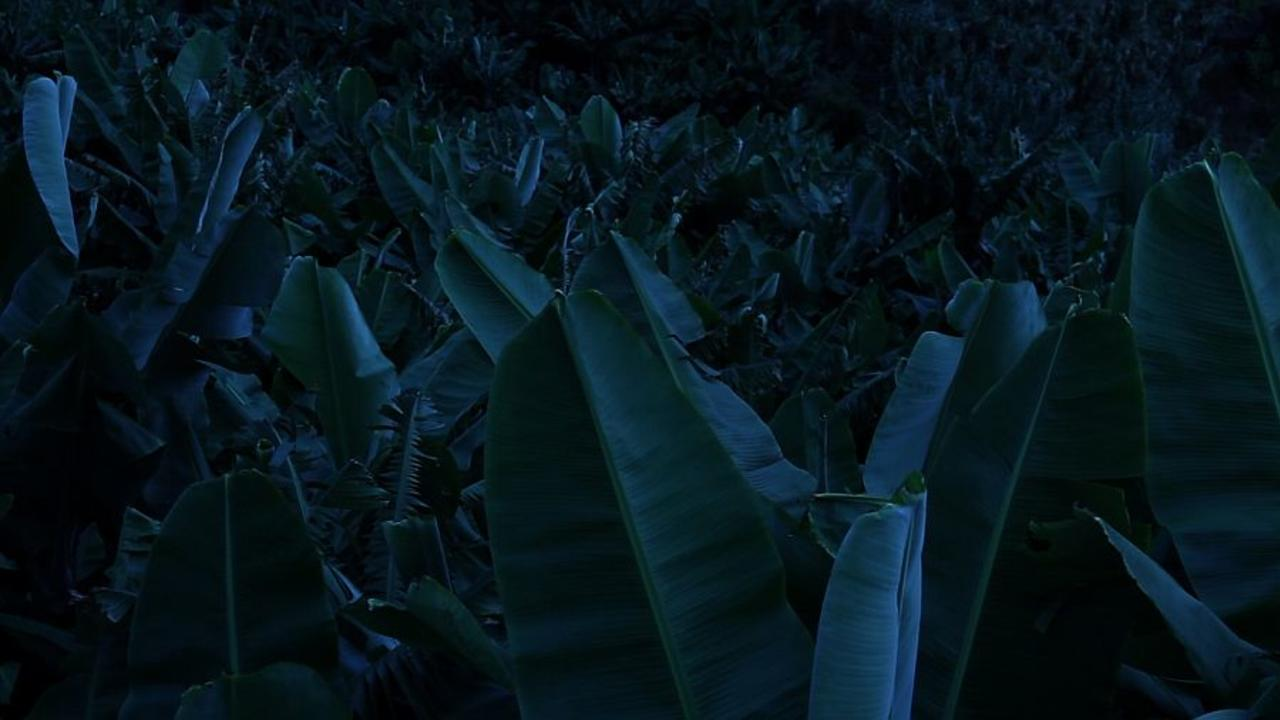 Film Still from The Figures Carved Into the Knife by the Sap of the Banana Trees